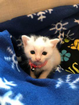 子猫ラッシュの画像